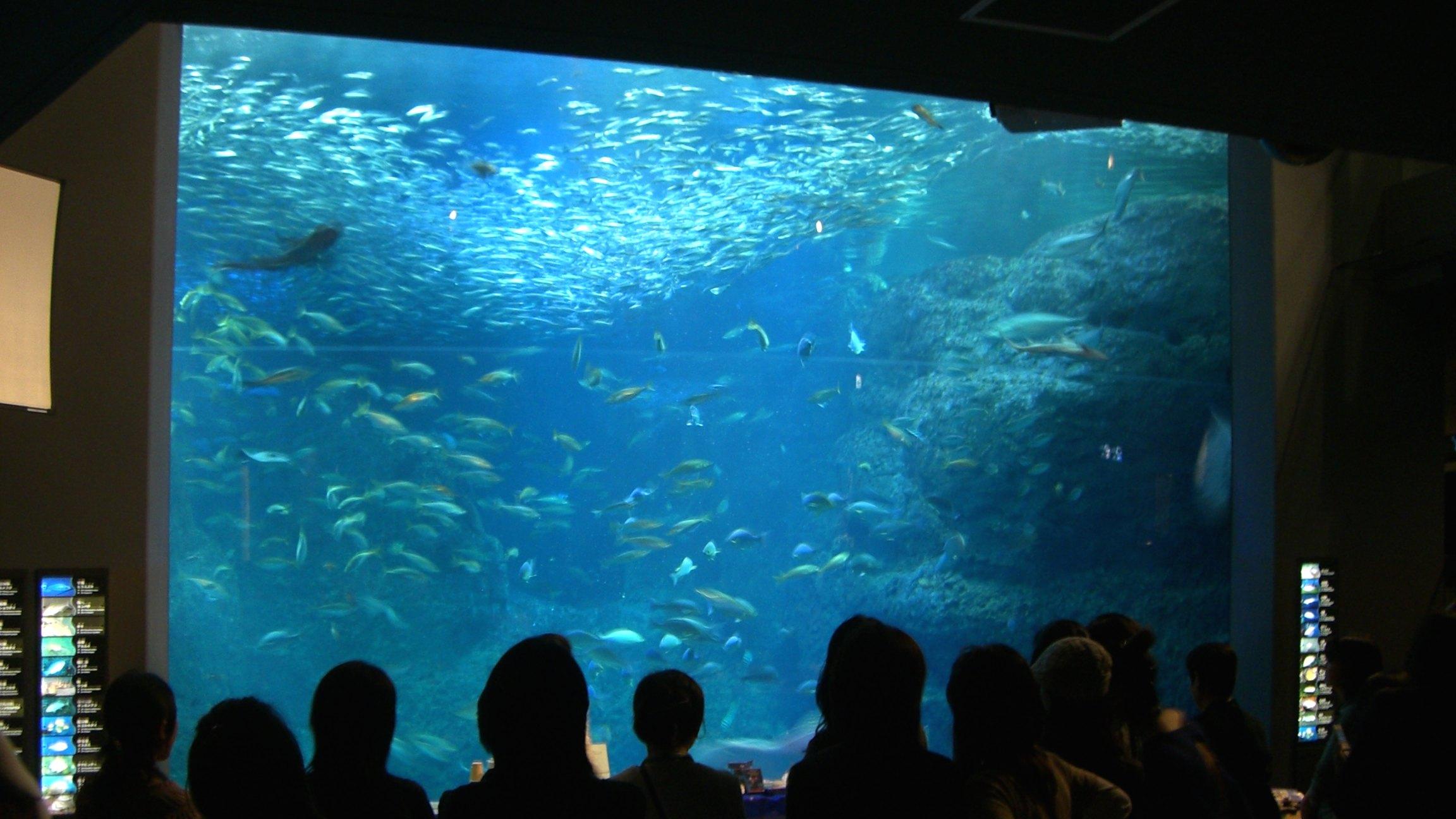 江ノ島水族館でのワークショップ運営をサポート!