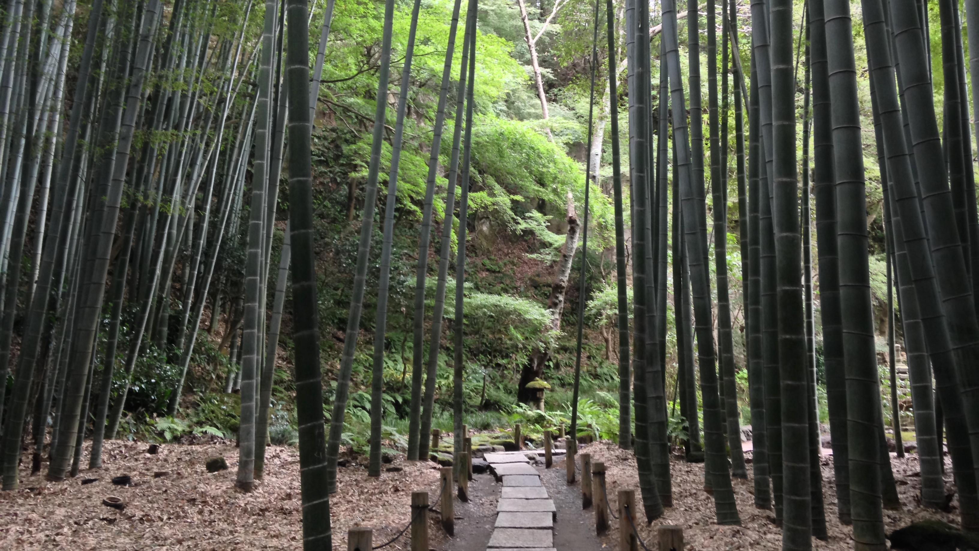 【鎌倉 竹の寺・報国寺】2千本の孟宗竹の庭に感激!